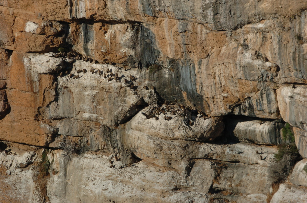"""Buitreras en los Mallos de Riglos vistas desde el """"Mirador de los Buitres"""""""