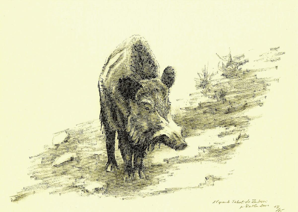 El gran jabalí de Bartosín